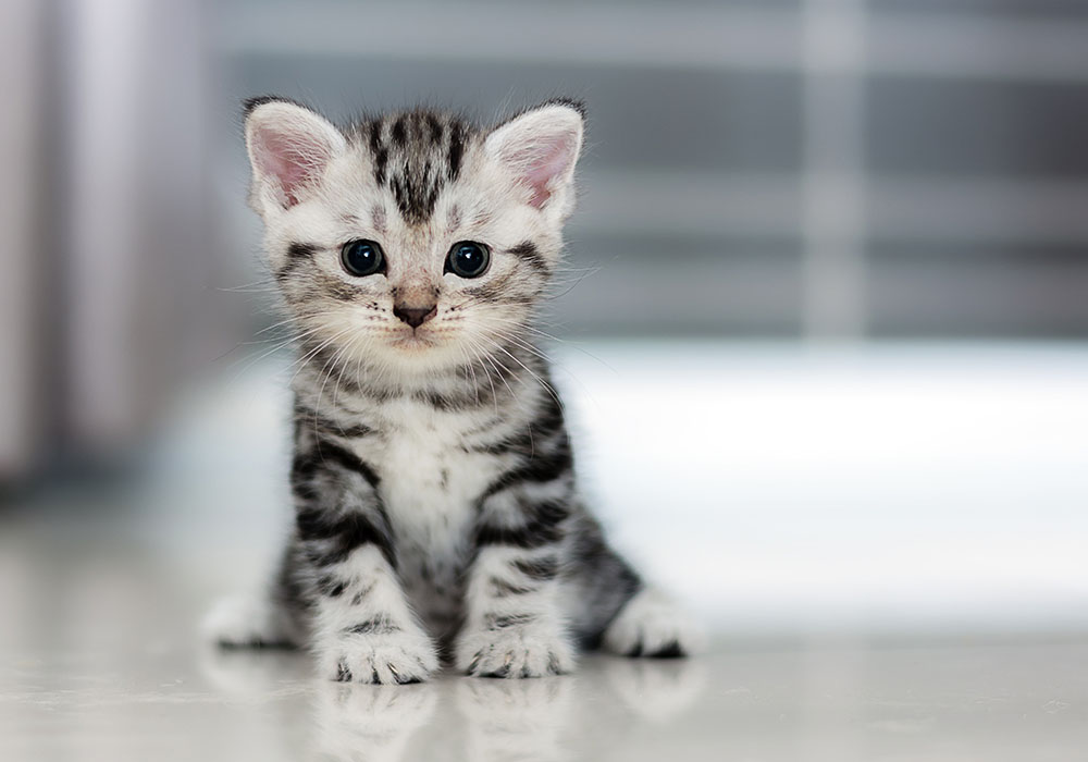 Ibu Mengandung Dan Kucing
